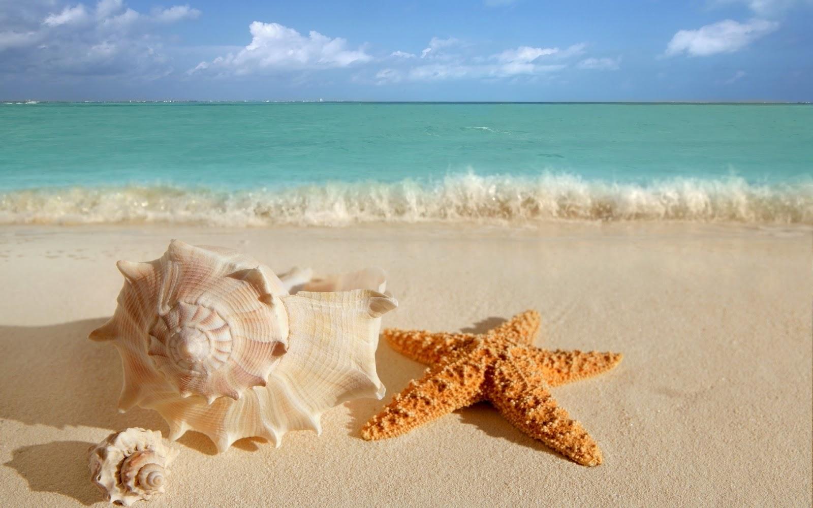 Masaje Con Caracolas O Conchas De Mar Rixikes - Fotos-de-conchas-de-mar